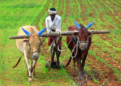 Indian agriculture deregulation being considered