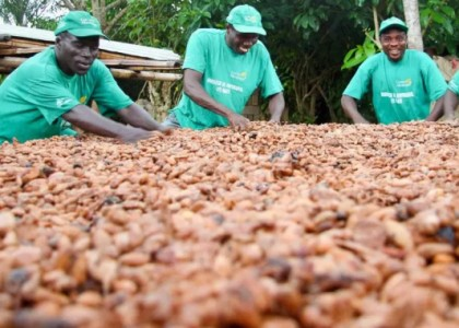 Ghana : African experts brainstorm on cashew profitability