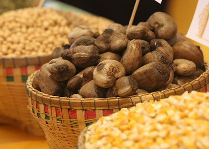 Cashew season ends with slight increase in yields