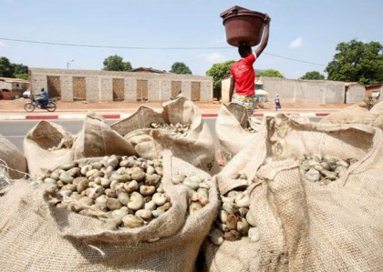 Cashew exporters seek govt support despite record production, lower prices